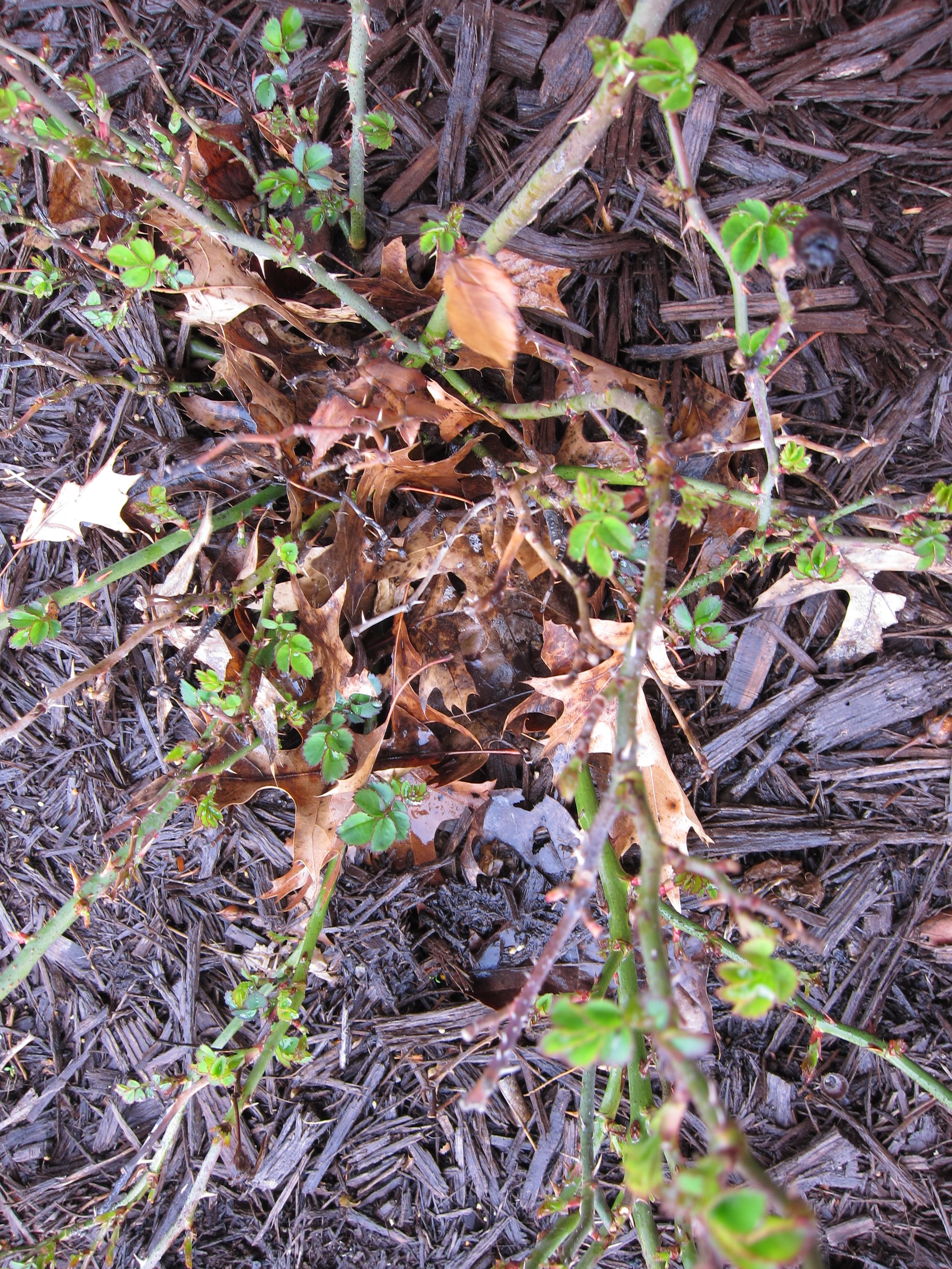 Leaves-01-IMG_7373