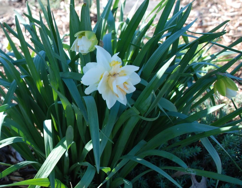 Spring-02-DSC_2257 (2)